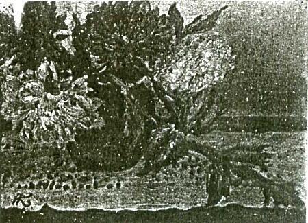 「ダリヤ」1921頃.jpg