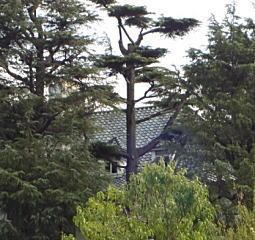 クロマツ林の西洋館.jpg