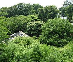 タヌキの森3.jpg