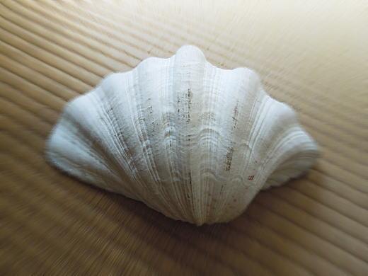 三岸アトリエ貝殻.JPG