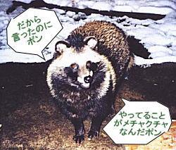 下落合タヌキ.jpg