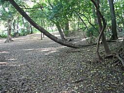 中野地域の森.JPG