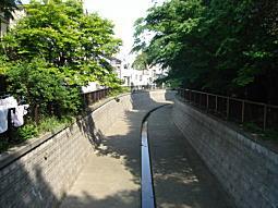 中野妙正寺川1.JPG