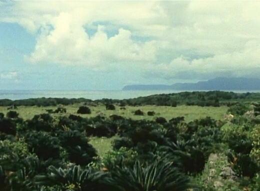 光りの島1995.jpg