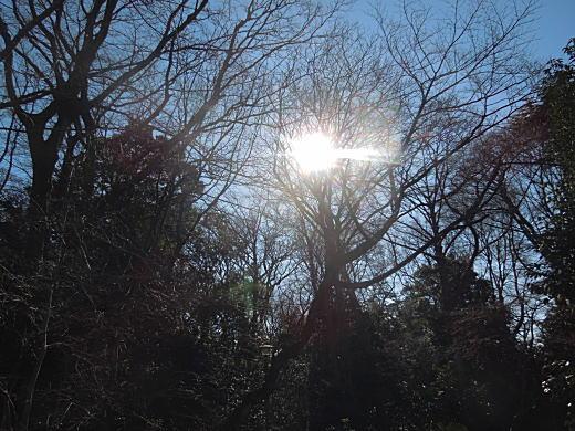 冬陽の下落合.JPG