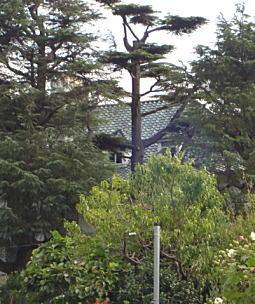 大磯池田邸.JPG