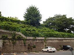 大黒葡萄酒工場跡3.JPG