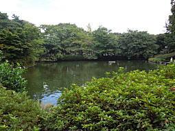 妙正寺池.JPG