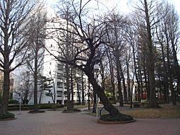 学習院キャンパス.JPG
