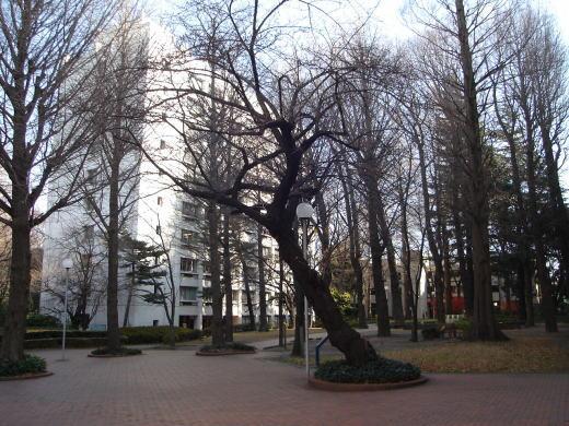 学習院キャンパス1.JPG