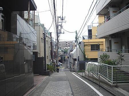 早稲田通り崖線.JPG