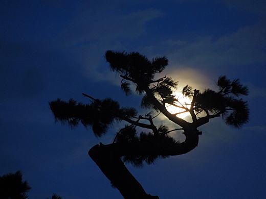 東海道松並木.JPG