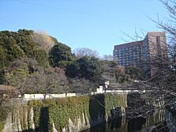 椿山下.JPG
