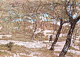 海鳴りの林.jpg