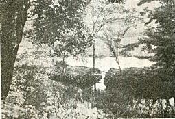 濯桜川の沼1933.jpg