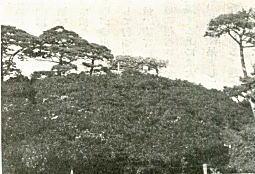 玉円峰(箱根山)1933.jpg