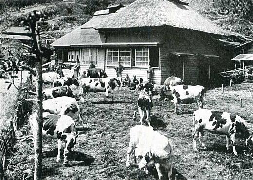 神奈川県大磯農畜兼業農家.jpg