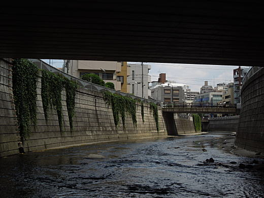 神田川・神高橋下1.JPG