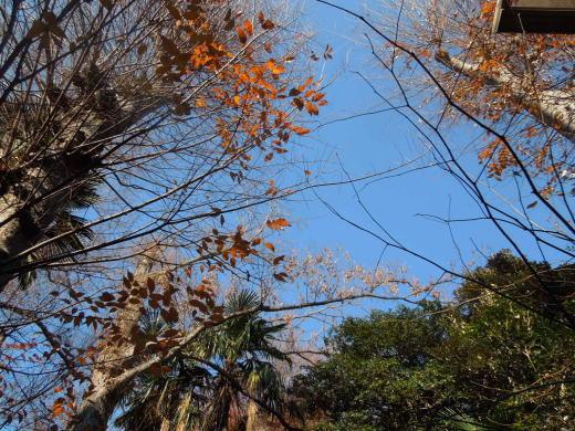 裏の森.JPG