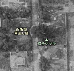 近衛町落雷ケヤキ.JPG