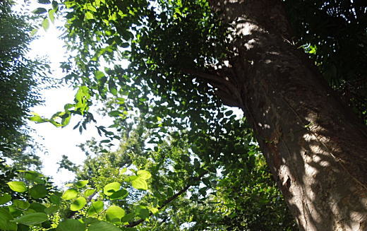 野鳥の森公園.jpg