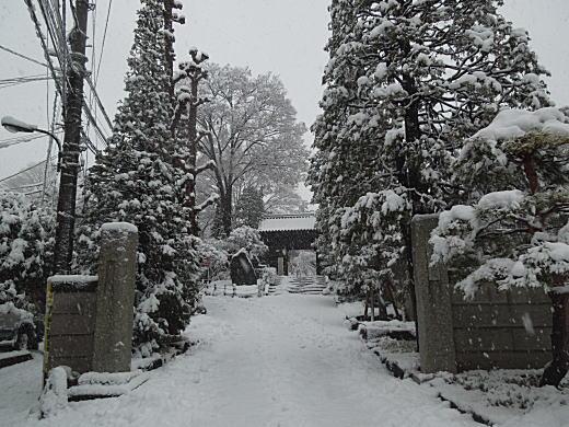 雪の下落合1.JPG