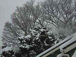 雪の下落合3.JPG