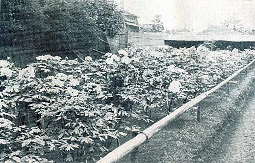 静観園1932.jpg