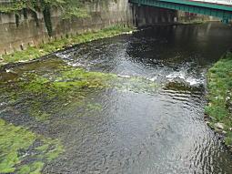 高田橋から.JPG
