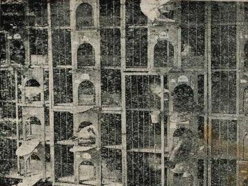 鳩舎巣房1.jpg