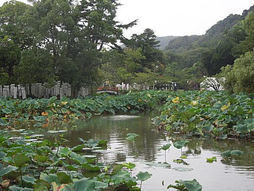 鶴岡八幡宮源平池.JPG