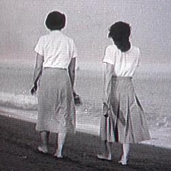 麦秋1951.jpg