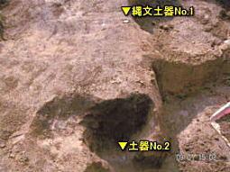 タヌキの森2.jpg