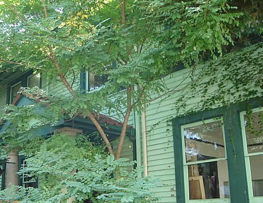 メーヤー館2006.jpg