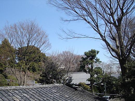 下落合の空201103.JPG