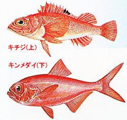 両魚比較.jpg