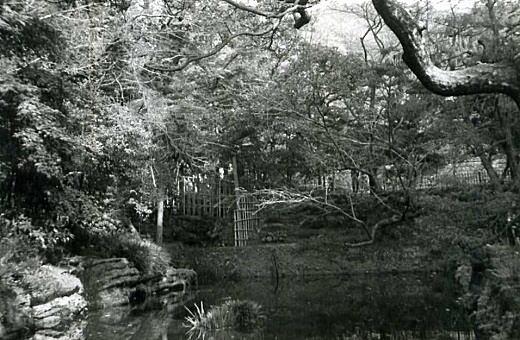円覚寺6妙高池.jpg
