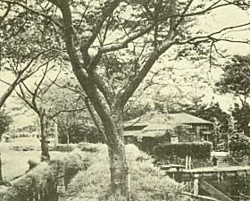 千川上水(要町3丁目).jpg