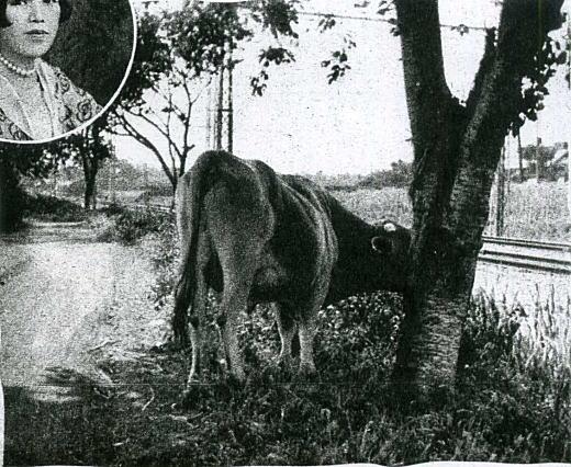 吉屋信子「牛」.jpg