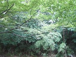 和田山哲学堂.JPG