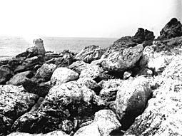 大磯隆起19230901.jpg