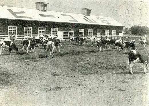 守山酪農研究所1938.jpg