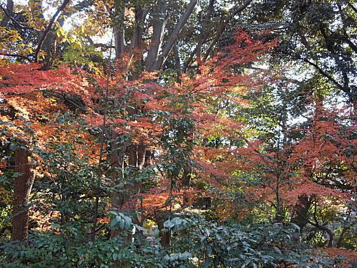 富士見茶屋2.JPG
