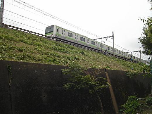 山手線土手1.JPG