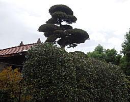 嶺田邸1.JPG