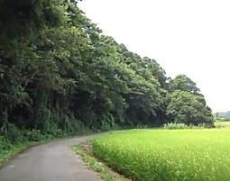 我孫子ハケの道.jpg