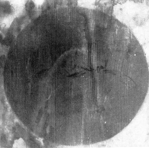 月見岡八幡天井絵1967.jpg