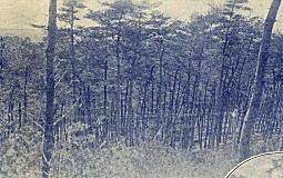 湖畔の森.jpg