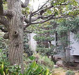 田原邸.JPG