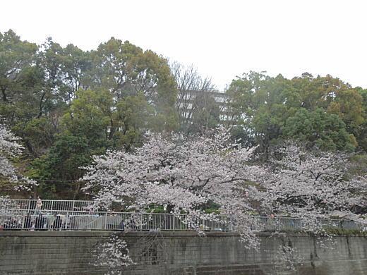 目白台アパート(神田川).jpg